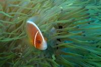 17.12.26Nさん、6年ぶりに海へ! - 沖縄本島 島んちゅガイドの『ダイビング日誌』