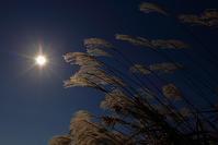 お日様が恋しい季節 - 赤煉瓦洋館の雅茶子