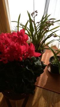 赤とピンクが好き - てんねん生活 ARAKOKI