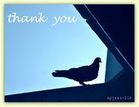 THANK YOU - caetla