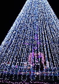 長居植物園(大阪市)のクリスマスイルミネーション - 高原に行きたい