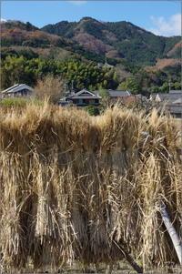 葛城市當麻⑫ - ぶらり記録(写真) 奈良・大阪・・・