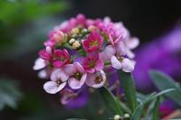 12月でも咲いていた花、たくさん - 子猫の迷い道Ⅱ