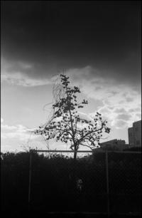 渋柿 - のっとこ