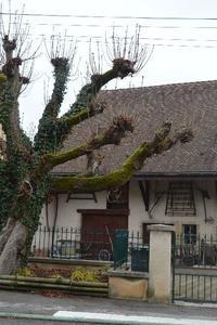 Montbéliardの布①CHANVRE - アルルの図書館* 旅する古道具屋
