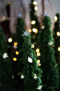 12月のレッスンツリーを作る -  La Fleur