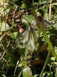 今年最後の蝶 - おらんくの自然満喫