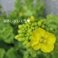 定期的な温活☆ - aloha healing Makanoe