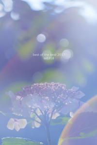 今年のいちばん。 - Yuruyuru Photograph