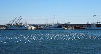 師走の九十九里・片貝漁港 - 東金、折々の風景