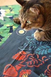 とらお君のこと - ゆきなそう  猫とガーデニングの日記