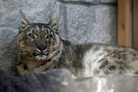 冬の日の「ミュウ」 - 動物園放浪記