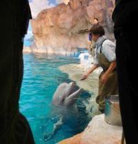 マゴ守り水族館 - うまこの天袋