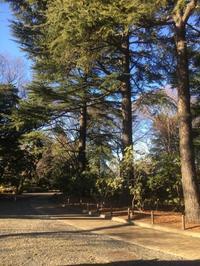 神代植物園 - 好きなものに囲まれて2