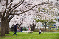 春 - ノッツォのホデナス