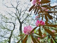 石楠花 - いつかみたソラ