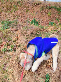 モテモテクルトン - 犬との穏やかな日々