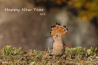 新年おめでとうございます - takiのカメラ散歩~☆