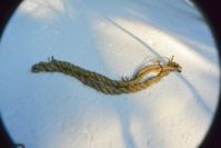 出羽三山神社松例祭の綱まき - 「 ボ ♪ ボ ♪ 僕らは釣れない中年団 ♪ 」