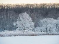 2017年大晦日も・・きれいな霧氷!良いお年を・・。 - 十勝・中札内村「森の中の日記」~café&宿カンタベリー~