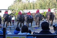 市原ぞうの国&サユリワールドへ行って来ました♪ - 続々・動物園ありマス。