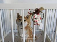 冬休みのアルバム「笑犬来福」 - yamatoのひとりごと