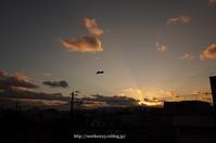 夕暮れ - Noriko's Photo  -light & shadow-