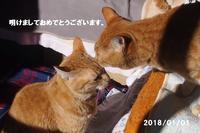 新年あけましておめでとうございます。 - 猫と自然と散歩の日々