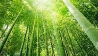 ストレス うつのお薬よりも効果が期待できる ものに朝陽をあびることと、腹式呼吸と - 心のスピリチュアル感じてみませんか