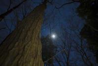 夜中のホソミオツネントンボ観察 - オヤヂのご近所仲間日記
