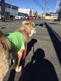 人が大好きクルトン - 犬との穏やかな日々