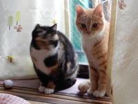 みんなでお正月 - 愛犬家の猫日記