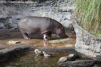 2017年12月 天王寺動物園 その5 - ハープの徒然草
