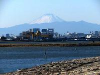 葛西臨海公園で富士山 - 子猫の迷い道Ⅱ