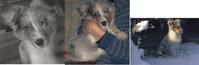 トープの訪問 - hibariの巣