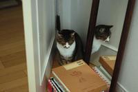 鏡に写る - サバとタラ