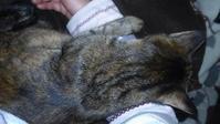 真夜中の訪問者 - 猫に目薬