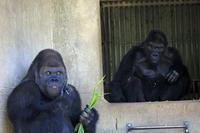 とある一日 - 動物園のど!