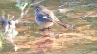 小金井公園1/3 - 山と鳥を愛するアナパパ