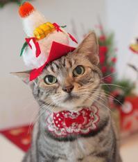2018年 お正月にゃ! - 愛しき猫にゃん♪