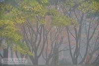 朝霧 - Mark.M.Watanabeの熊本撮影紀行