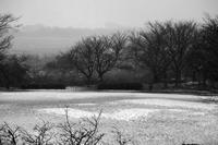 吹雪にかすむ鳥屋野潟もほんの数分後に日が差してくる。 - Yoshi-A の写真の楽しみ