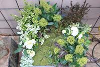 新年のお客様をお迎えする寄せ植え - CHIROのお庭しごと