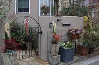 お正月の寄せ植え配置 - CHIROのお庭しごと