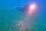 18.1.4正月ダイブを振り返って - 沖縄本島 島んちゅガイドの『ダイビング日誌』