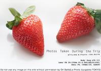 ソニーストア福岡天神さいとうおりトークショーご来場ありがとうございました。苺をα7RIIIとSEL24105Gで撮れたて作例 - 東京女子フォトレッスンサロン『ラ・フォト自由が丘』-写真とフォントとデザインと現像と-