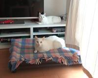 幸せな奇跡! - 家なき猫