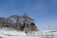 滝桜 - 四十の手習い 自転車と写真が好き