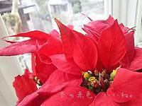 冬の赤色は、暖まる🎵 - ピアニスト山本実樹子のmiracle日記