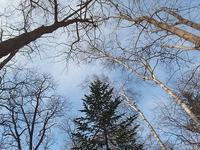 森へ初散歩 - 北緯44度の雑記帳